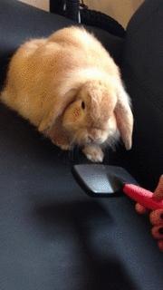 brushybrushy, rabbit, rabbits, No brushy for Freddie GIFs