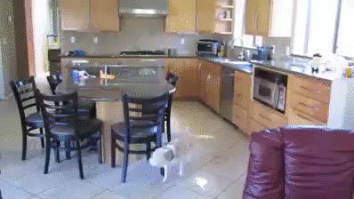 dog, likeus, smart, Problem Solving Dog GIFs