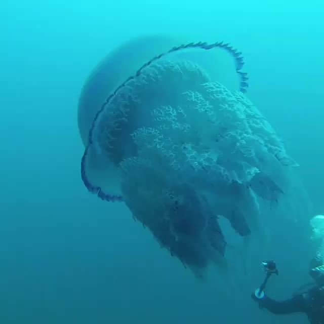 TheDepthsBelow, thalassophobia, Video by ayvalik3sea GIFs