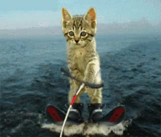 Watch and share Funny Animated Pictures Animals GIFs on Gfycat