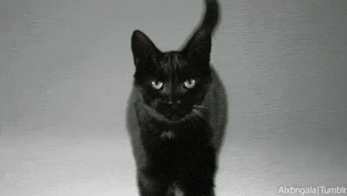 Watch this black cat GIF on Gfycat. Discover more related GIFs on Gfycat