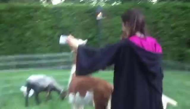 ariana grande, colleen ballinger, Ariana trying to take a selfie with an alpaca GIFs