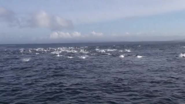 Watch and share Killer Whales Ambush A Pod Of 1,000 Dolphins GIFs on Gfycat