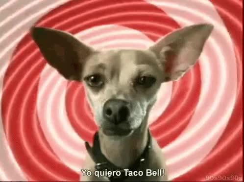 Watch and share Taco Dog GIFs on Gfycat