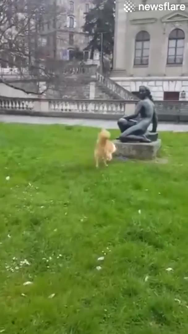 Watch and share Doggo Trying To Get A Statue To Play Fetch With Him GIFs on Gfycat