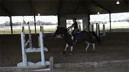 Watch BEST 3 Jumpers | 2015 damn my leg GIF on Gfycat. Discover more equestrian, gif, horse gif, jumpers, lexi, show jumping GIFs on Gfycat