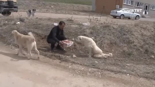 Watch Some men changed a dog's life in 30 minutes GIF on Gfycat. Discover more related GIFs on Gfycat