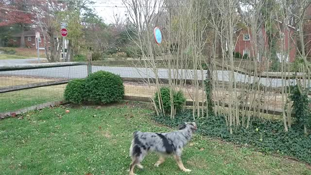 Watch and share Wigglebutts GIFs by Spencer Smith on Gfycat
