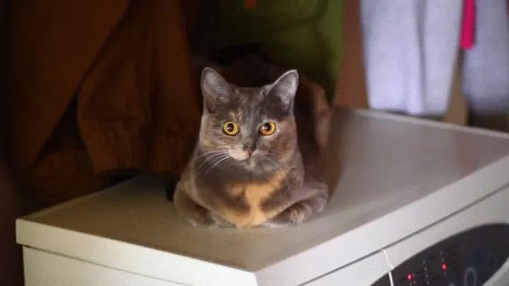 cat, irl, kitten, kitty, meow, meow_irl, Meow GIFs