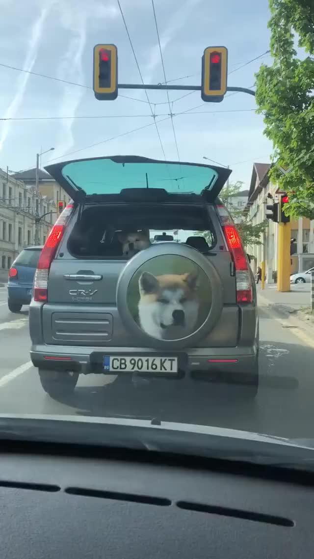 Watch and share Dog GIFs by Ah Negão on Gfycat