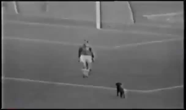 Watch and share Brazil - Greaves & Dog 1962 GIFs on Gfycat