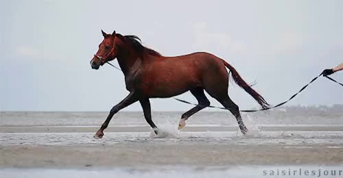 Watch and share Horses At The Beach GIFs and Horse Photography GIFs on Gfycat