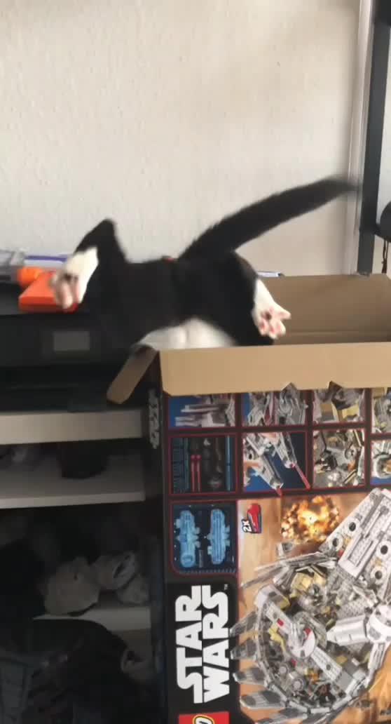 box, cat, clumsy, fml, kitten, mrw, star wars, stuck, upside down, FML Star Wars Life GIFs
