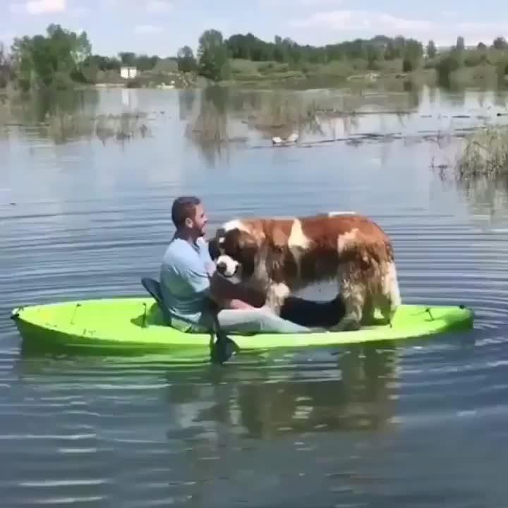 Kayaking is fun they said - Imgur GIFs