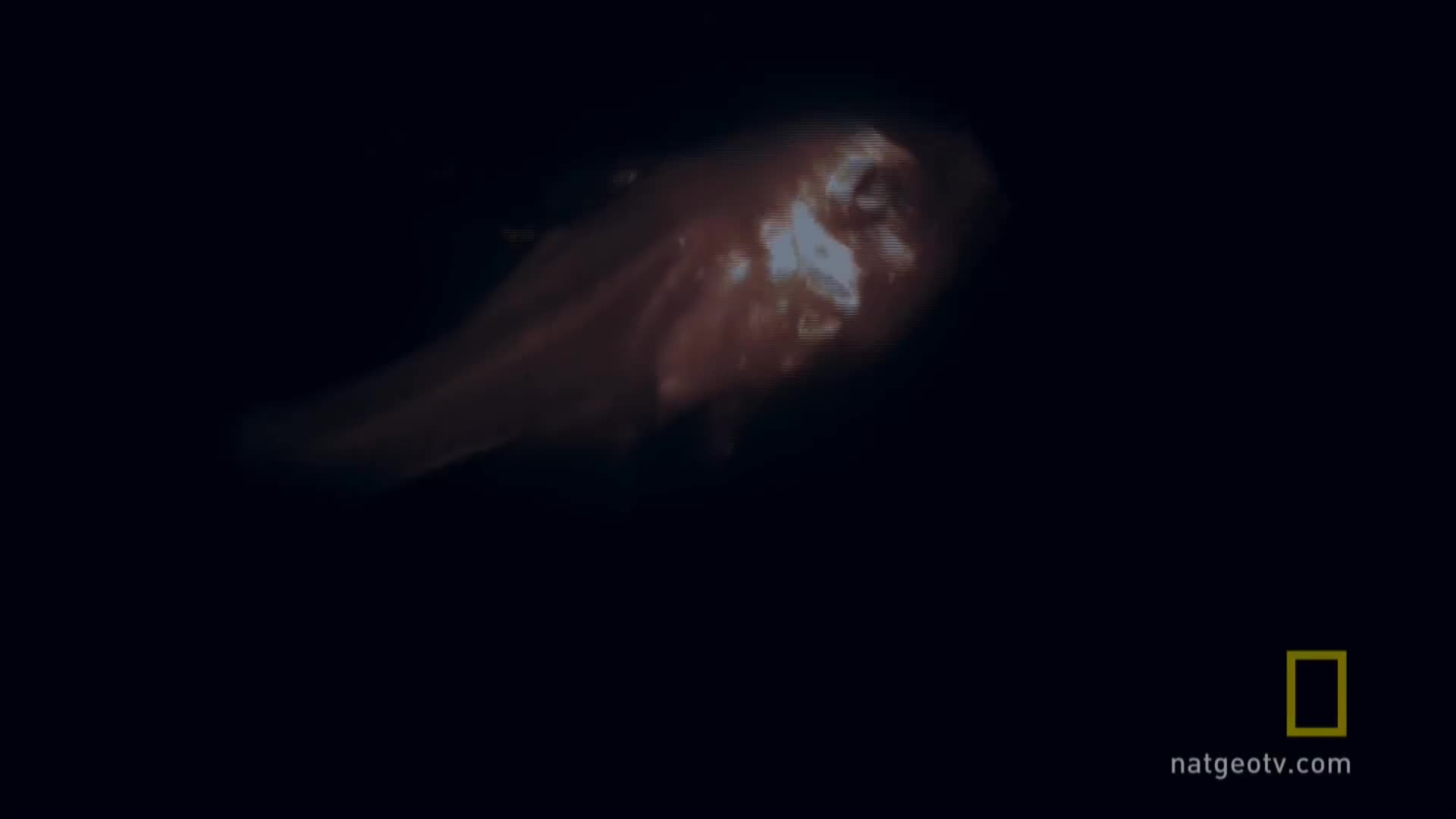 Bioluminescence, Bioluminescence on Camera, Hunt for the Giant Squid, National Geographic, deep sea diving, expedition week, giant squid video, nature, squid, starlight camera, Hadouken GIFs