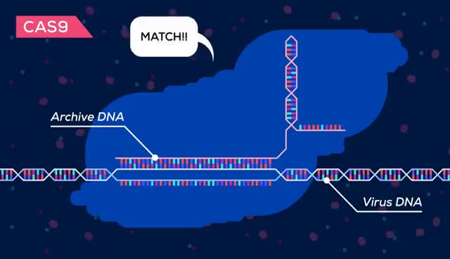Watch and share Genetic Engineering Will Change Everything Forever – CRISPR GIFs on Gfycat