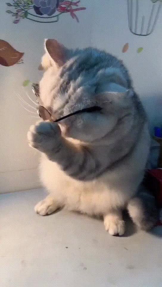 Watch and share Glasses GIFs and Cute GIFs by soees on Gfycat