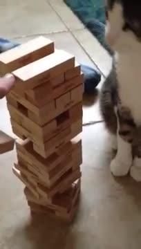 cat, cats, Wait fur it 😹 GIFs