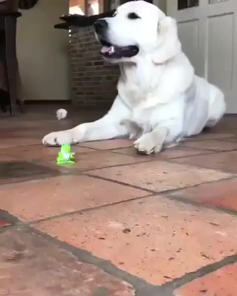 dog, Pupper flipping out GIFs