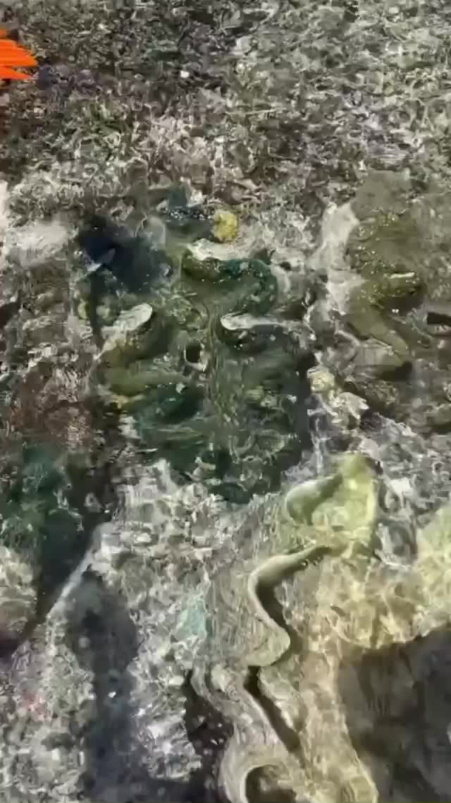 Watch and share Clams GIFs by vaguenonetheless on Gfycat