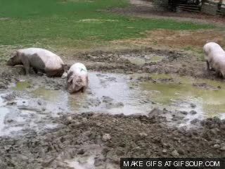 Watch and share Mud GIFs on Gfycat