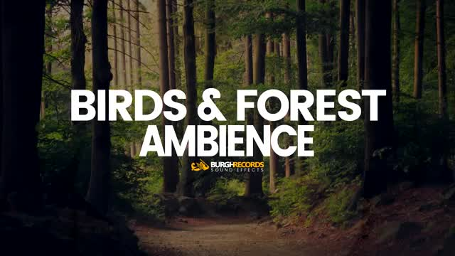 Birds & Forest Ambience | Nature Sound Effects | Free Download GIF