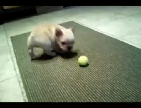 Watch and share Puppy GIFs on Gfycat