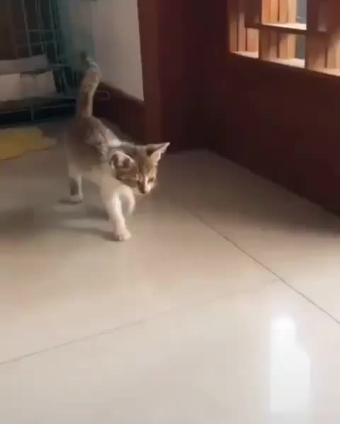 Watch and share Trusting Hooman GIFs by vani  on Gfycat