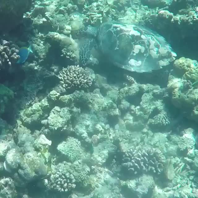 Watch and share Dory And Turtle  GIFs by O-shi on Gfycat