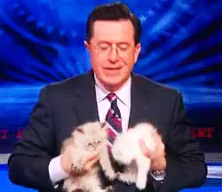 Watch and share Stephen Colbert GIFs and Kittens GIFs on Gfycat