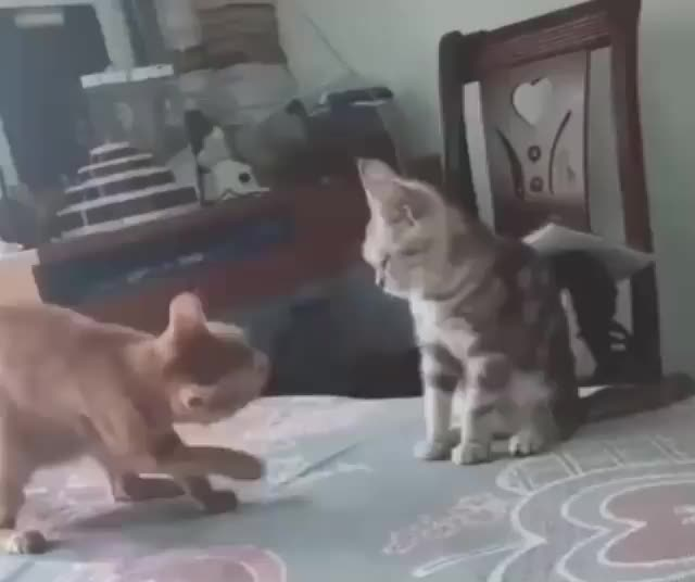 Watch and share Cats GIFs by Irwanda on Gfycat