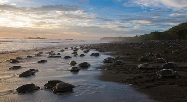 Watch and share Beach GIFs on Gfycat