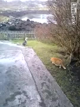Watch and share Liveleak GIFs and Com GIFs by likkaon on Gfycat