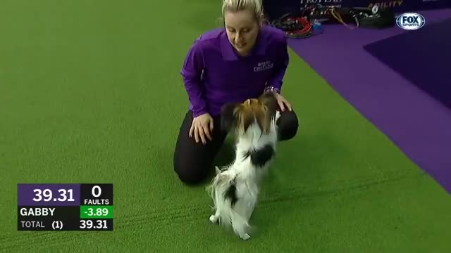 Watch Gabby gets punched GIF on Gfycat. Discover more 2019, Division, Gabby, Westminster, agility, masters, title, wkc GIFs on Gfycat