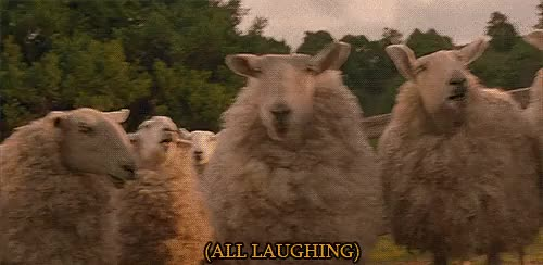 Watch and share Sheep GIFs on Gfycat