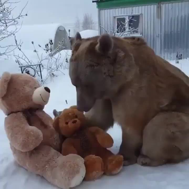 Bear cuddling their plush doppelgänger GIFs