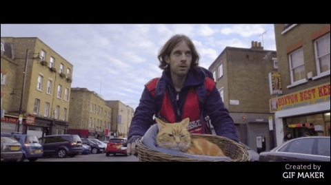 aww, gifs, movies, A Street Cat Named Bob GIFs