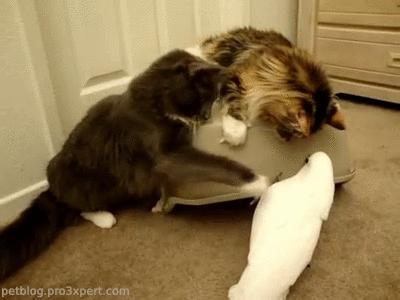 bird, birds, cat, cats, kitten, kittens, parrot, pet, pet blog, petcorner, pets, playing with box, *Who's a good bird!! * [video] GIFs