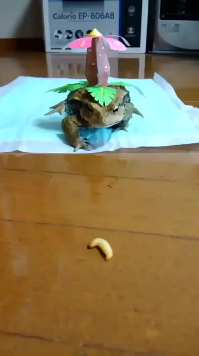 Watch and share Venusaur Vs Caterpie GIFs on Gfycat