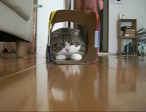 Watch and share Maru The Cat GIFs on Gfycat