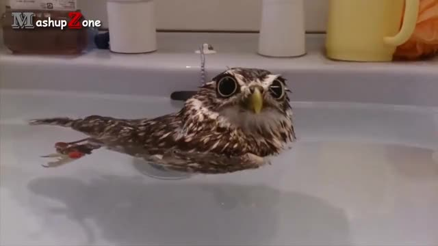 Watch Owl - A Funny Owls And Cute Owls Compilation || NEW GIF on Gfycat. Discover more All Tags, VIDEOS, animal, animals, bird, birds, clips, cuddle, cuddling, cute, funny, moments, owl, owls, pet, pets, video GIFs on Gfycat