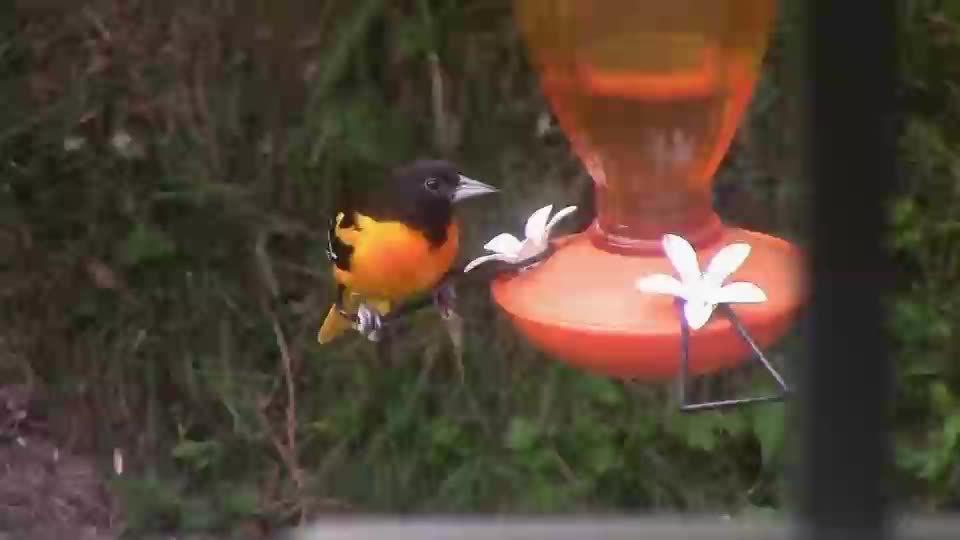 birdpics, wildlifephotography,  GIFs