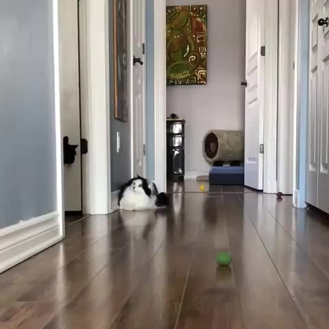 Watch What the heck is this guy's problem??? GIF by RespectMyAuthoriteh (@respectmyauth) on Gfycat. Discover more cat, cats, funny GIFs on Gfycat