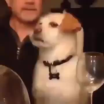 Dog rolling his eyes gif