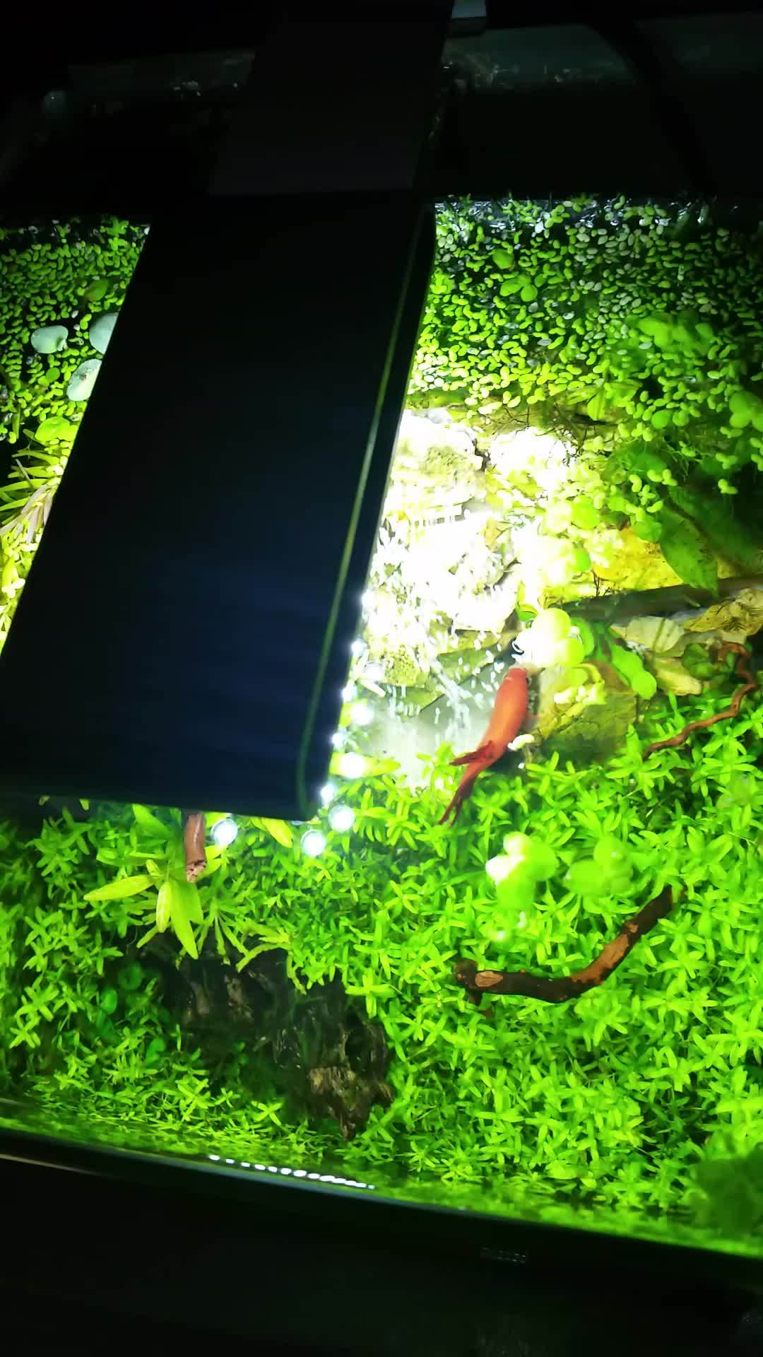 aquariums, plantedtank, Waterfall in a Fluval Spec III Aquarium GIFs