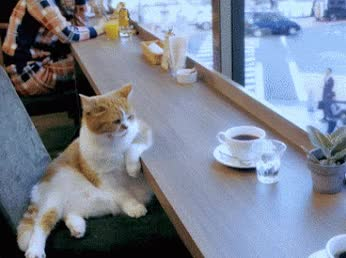 Watch Just chillin'. #kittens #cats #ilovecats #catsforever #catgifs GIF on Gfycat. Discover more related GIFs on Gfycat