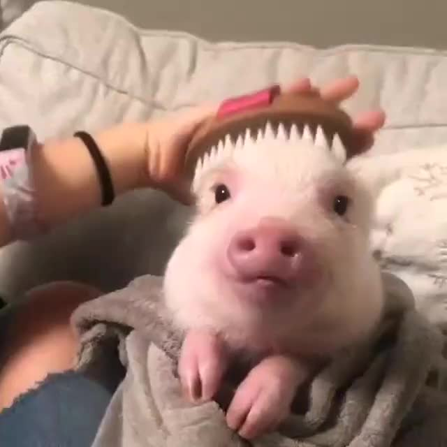 Watch and share Cute Animals GIFs and Rare Puppers GIFs by lnfinity on Gfycat