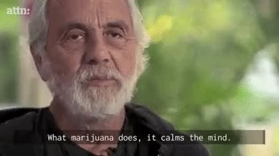 Watch Tommy Chong Talks Marijuana Legalization with ATTN: GIF on Gfycat. Discover more related GIFs on Gfycat