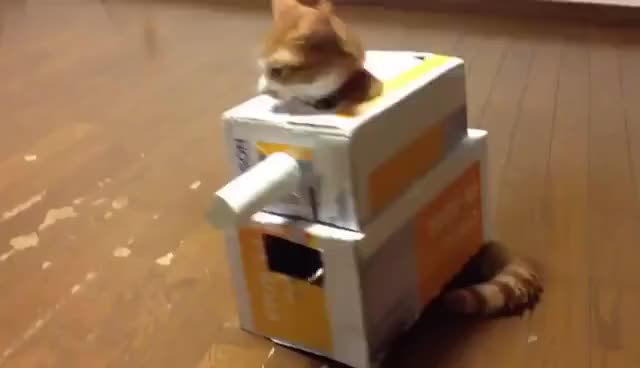 Watch this tank GIF on Gfycat. Discover more Cat, Tank, cat, tank, transportation GIFs on Gfycat