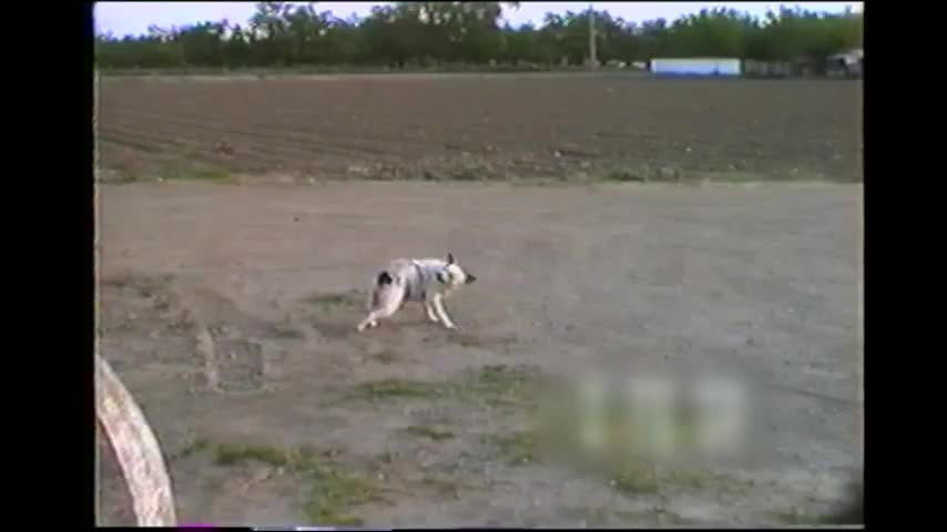 1Voice1Life, Dog scratches his own back with a rope GIFs